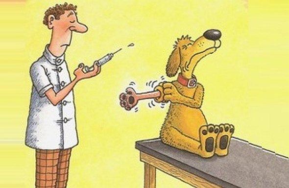 szczepienie-psow-fot-internet