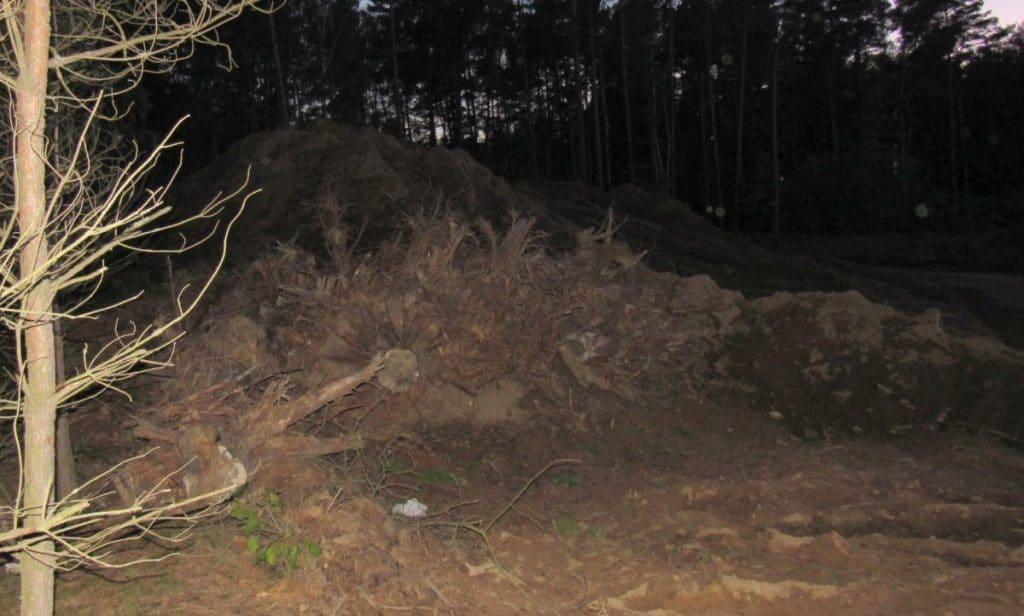 pozostalosc po lesie na wyrobisku w zwirowni borowiec